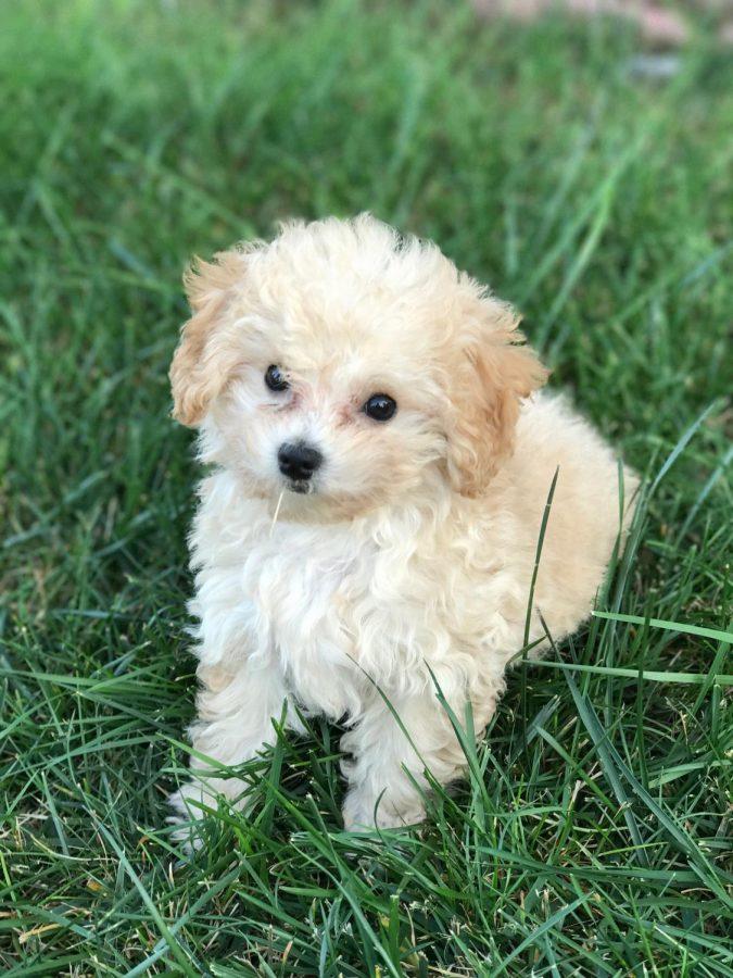 Pet of the Week 9/2