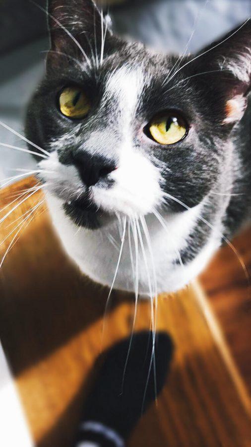 Pet of the Week 3/2